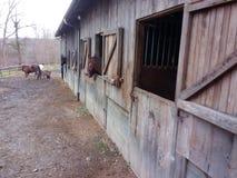 Стильная жизнь и лошади фермы Стоковые Фото