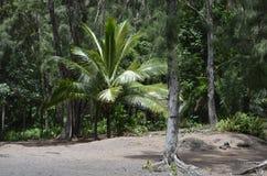 Стиль Гаваи острова Gilligans Стоковое Изображение
