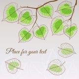 Стиль зеленого цвета лист липы с местом для вашего текста Стоковые Изображения