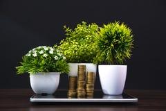 Стога монеток и меньший букет дерева или цветка в белом острословии вазы Стоковое Изображение