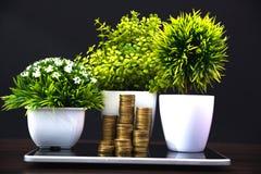 Стога монеток и меньший букет дерева или цветка в белом острословии вазы Стоковое Изображение RF
