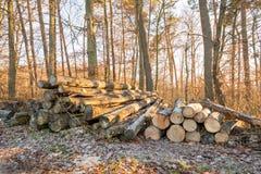 Стога древесины в forrest в зиме в Германии Стоковые Изображения RF