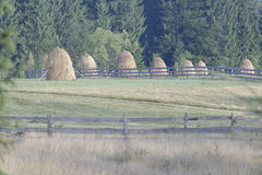 Стога сена в Трансильвании стоковые изображения rf