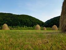 Стога сена и зеленая трава на горном склоне аграрное поле в горной области Ландшафт красивой сельской местности сельский на солне Стоковое Изображение RF
