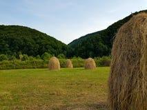 Стога сена и зеленая трава на горном склоне аграрное поле в горной области Ландшафт красивой сельской местности сельский на солне Стоковые Изображения
