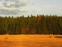 Стога сена на поле лета Сжатое сено на красивом поле лета o стоковые фотографии rf