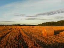 Стога сена на поле лета Сжатое сено на красивом поле лета o стоковые изображения