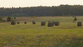 Стога сена Стоковые Фото