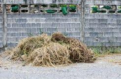Стога сухой травы на малых земле утеса и цементе grunge преграждают wa Стоковые Изображения RF