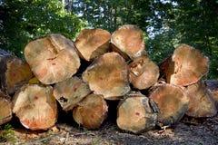 Стог валить деревьев в лесе Стоковые Изображения RF
