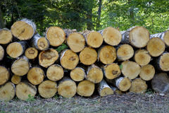 Стог валить деревьев в лесе Стоковое Изображение