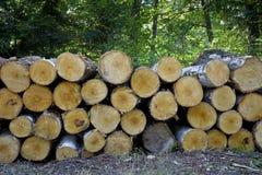 Стог валить деревьев в лесе Стоковое Фото