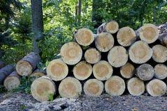 Стог валить деревьев в лесе Стоковое Изображение RF