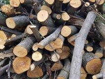Стог деревянной ветви журнала Стоковые Изображения