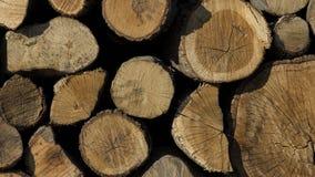 Стог древесины Куча хобота Стоковые Изображения RF