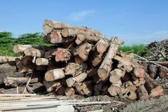Стог журнала древесины teak Стоковое Изображение RF