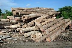 Стог журнала древесины teak Стоковые Изображения RF