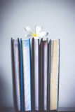 Стог книг и цветка frangipani Стоковые Фотографии RF