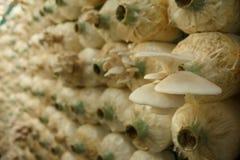 Стог кубов гриба в близкой ферме Стоковые Фото