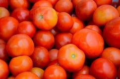 Стог многочисленных томатов стоковые изображения rf