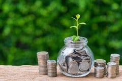 Стог монеток и опарника с вполне монеток с pla ростка роста Стоковые Изображения RF