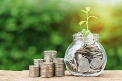 Стог монеток и опарника с вполне монеток с pla ростка роста Стоковая Фотография RF