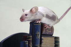 стог мыши книг Стоковые Фото
