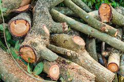 Стог древесины Стоковые Изображения RF
