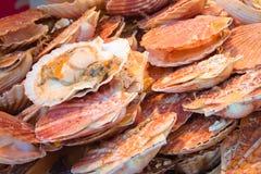 Свежие scallops на рынке хуторянина Стоковое Изображение