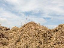 Стог сена в поле которое штабелировано совместно в большую кучу стоковые изображения rf