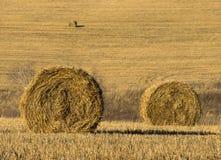 Стог сена в поле на солнечный день стоковое изображение rf