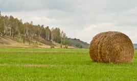 Стог сена на поле Стоковое Изображение