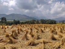Стог сена после косить поле стоковое изображение rf