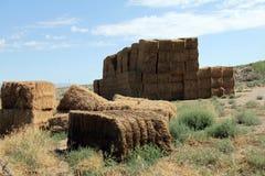 Стог сена пустыни Стоковое Изображение RF