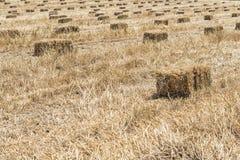 Стог сена пшеницы Стоковое Изображение
