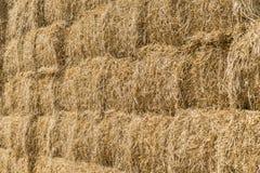 Стог сена пшеницы Стоковые Изображения RF