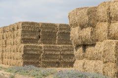 Стог сена пшеницы Стоковые Изображения