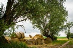 Стог сена Стоковая Фотография RF