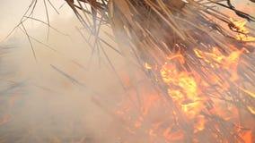 Стог сухой травы на огне видеоматериал