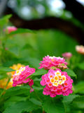 стог цветка Стоковое фото RF
