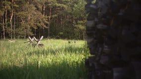 Стог швырка в лесе видеоматериал