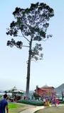Стойка высокого дерева в долине Стоковое фото RF