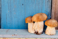 Стойка 3 грибов на деревянной полке Стоковые Фотографии RF