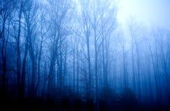 Стойка дерева в туманном утре Стоковая Фотография
