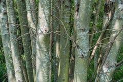 Стойка деревьев - крупный план Стоковые Изображения