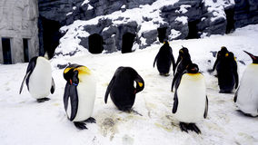 Стойка и сон Penquin животные в зиме идут снег Стоковые Фотографии RF