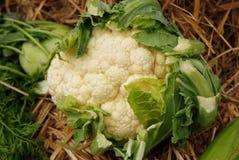 стойка маркированная cauliflower Стоковое Изображение