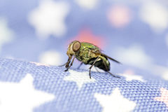 Стойка мухы на запачканной предпосылке стоковое изображение