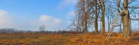 стойка оленей стоковая фотография rf