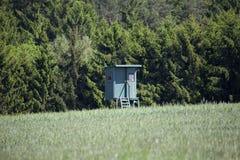 Стойка оленей в поле Стоковые Изображения RF